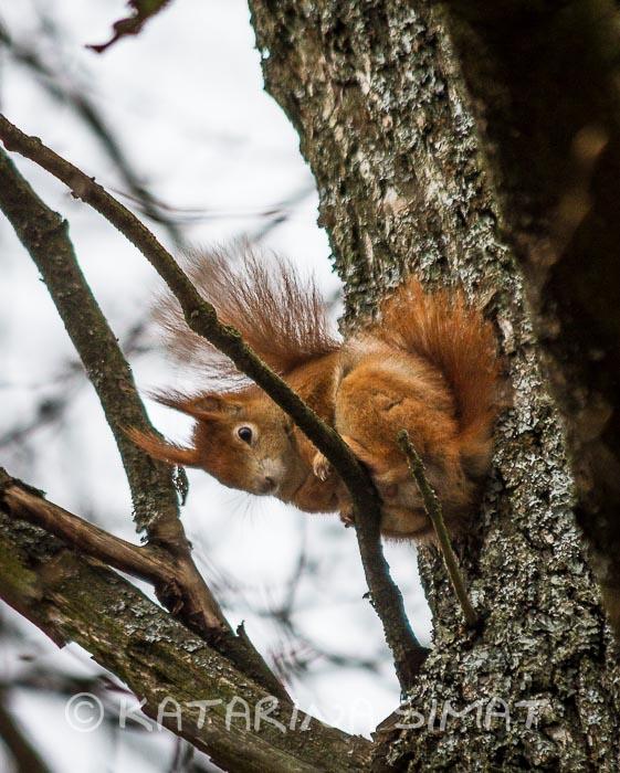 Eichhörnchensichtkontakt