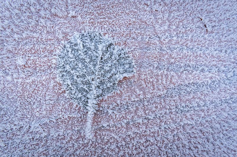 Eingefrorenes Blatt